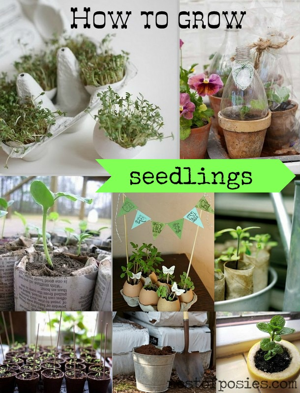 9 tips & tricks on How to grow seedlings via Nest of Posies