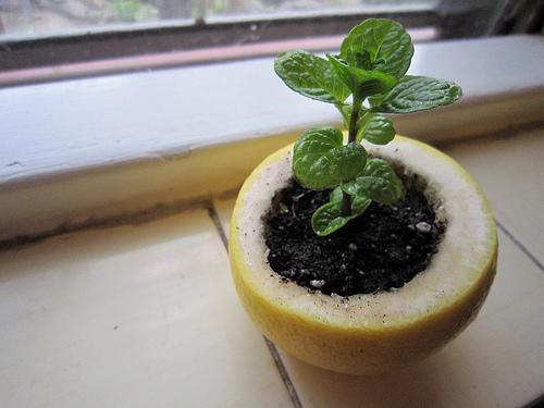 seedling pot