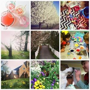 Life in Instagram via Nest of Posies