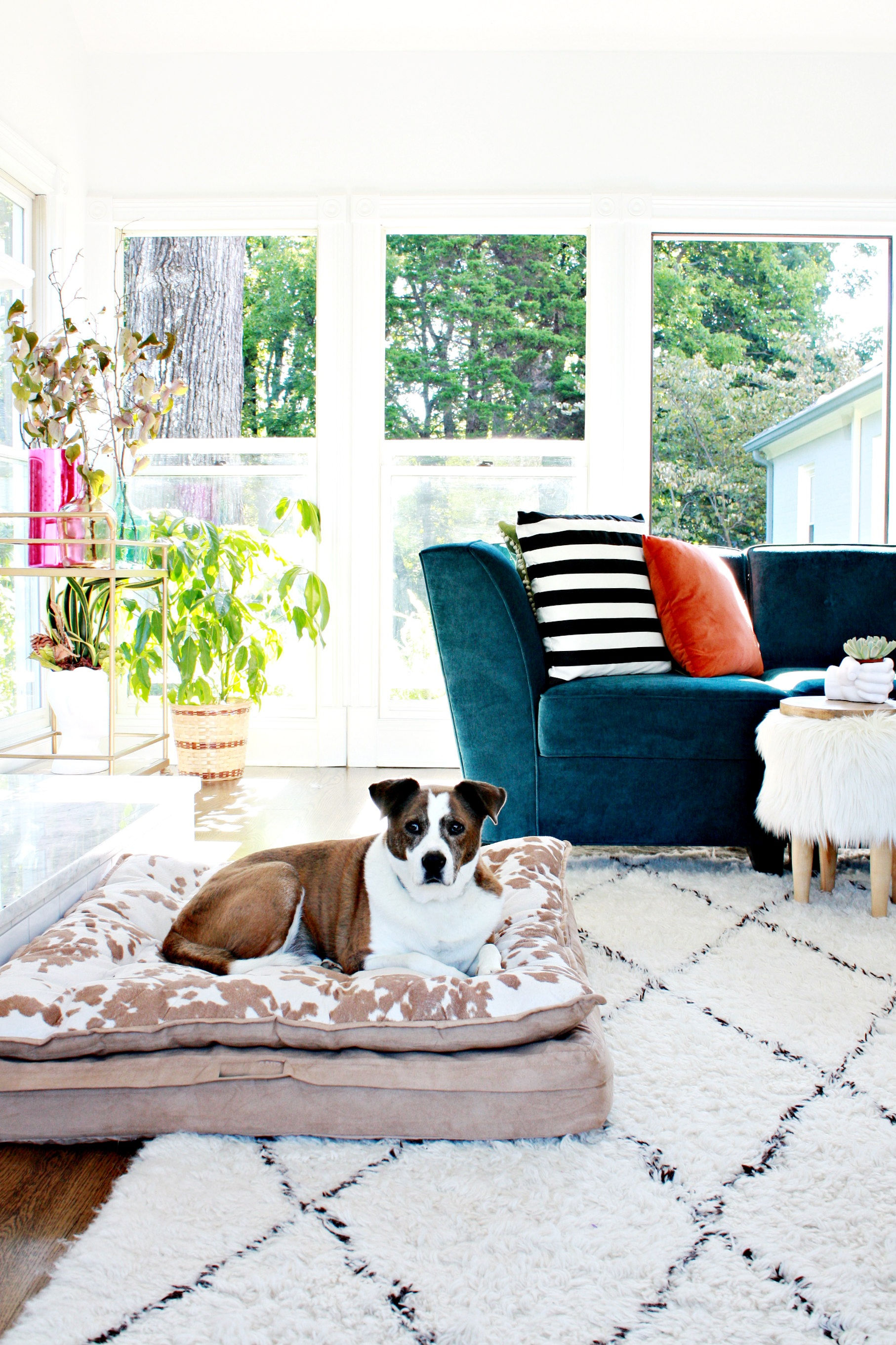 why we love our moroccan shag rug - first you should know i have  elementary age kids and a  pound dog idid question myself just once about the very light color of the rugknowing our