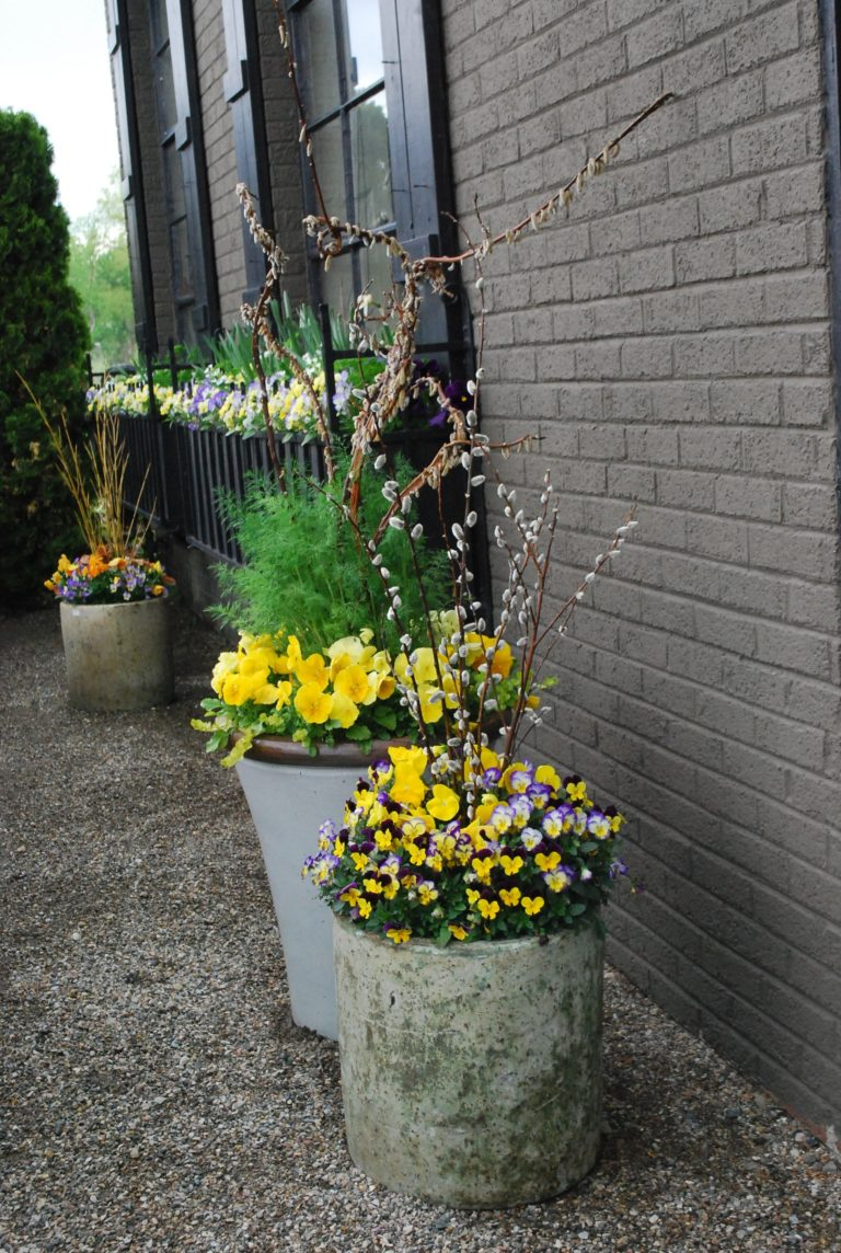 Spring container gardening nest of posies for Hearty plants for outdoors